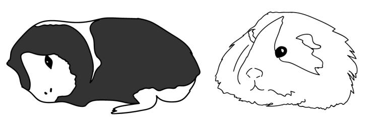 panda and valentino-01