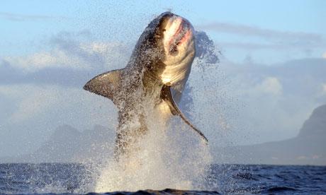 sharkbreach